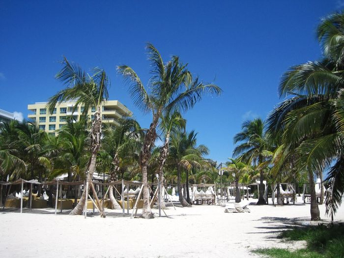 White sand beach with palm trees and clear blue sky Florida Hot Climate Resting Exploration White Sand Lifestyles Tourism Vacations Journey Beach Life Adventure Idyllic Summer Relaxation Beach Holiday Miami Travel Destinations Tree Plant Sky Nature Blue Land Clear Sky Sunlight Tropical Climate Palm Tree Sunny Beach No People