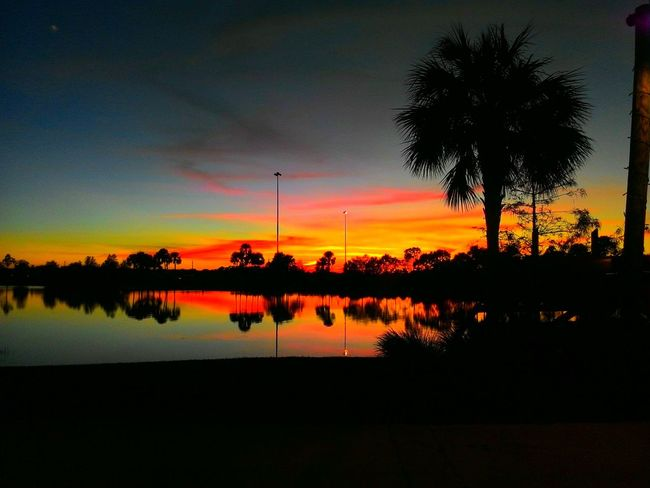 Tree Silhouette Sunset Reflection No People Tranquility Beauty In Nature Nature Tranquil Scene Outdoors Sky Scenics Palm Tree Water Day