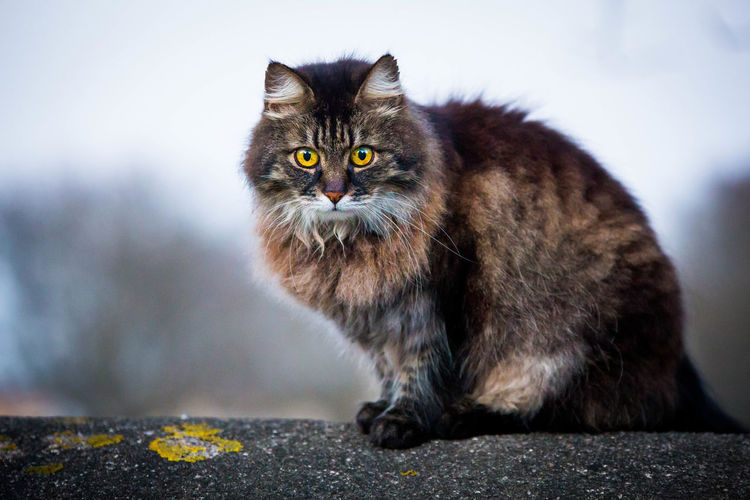 It saw me... Cat Looking At Camera Cat Stare Cat Staring At Me Cats Furry Friends Furryfriend Looking At Camera Staring At Me