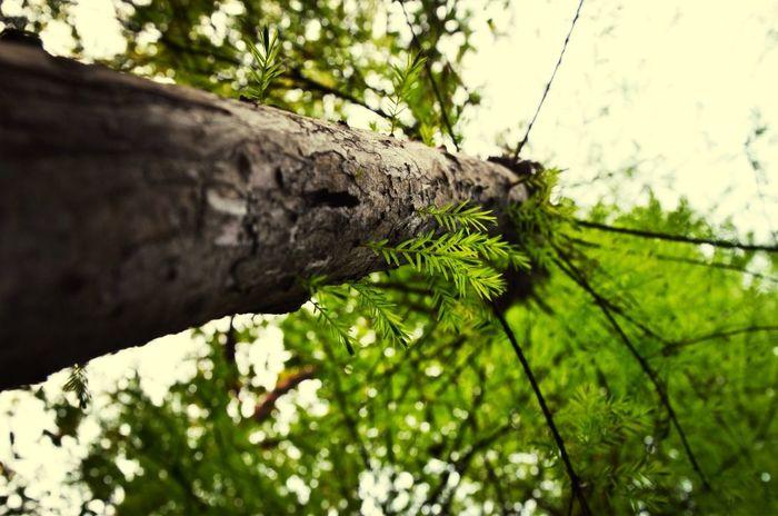 Hanging Out Taking Photos Hugging A Tree Enjoying Life at Baiyu Hill ,Guangzhou,Canton