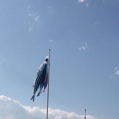 Kodomonohi Child Day Wind Koinobori Sky Cloud - Sky Flag Patriotism Low Angle View Nature Day Pole Waving Blue No People Sunlight