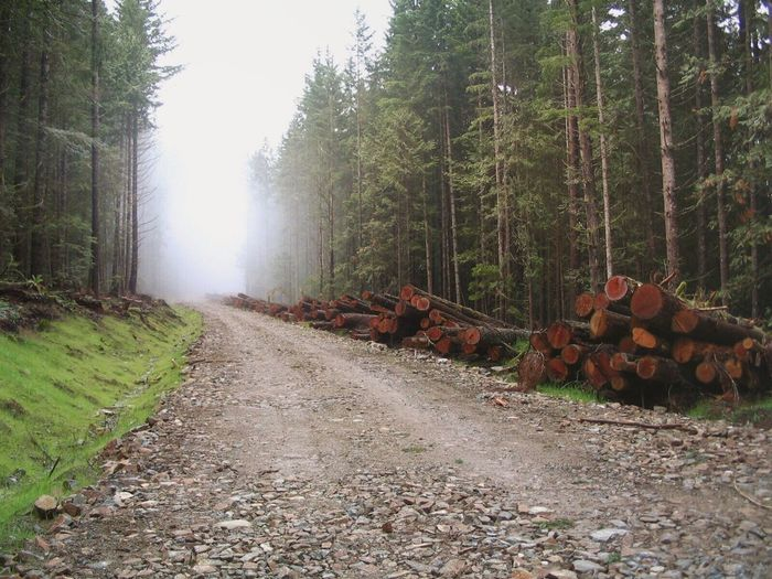 Forest road Nature Misty Forest Logging Roads Logging Zone Ecology Ecology Forest Cutting Trees Cut Down Outdoors Logging