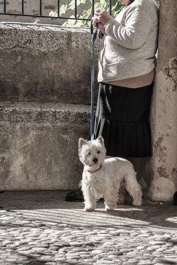 Low section of woman with dog