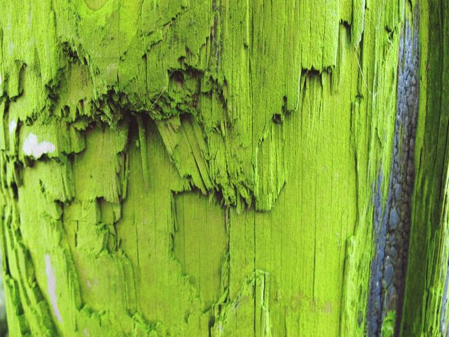 Contrast Colours Bright Weatheredwood Weathered Beautiful Nature Decay Cracks Jagged Composition Textured  Post Pole Telegraph Pole Mouldy Moulded Mould Wood Outdoors Green Texture Textures And Surfaces Macro Beauty Pattern Pieces Macro