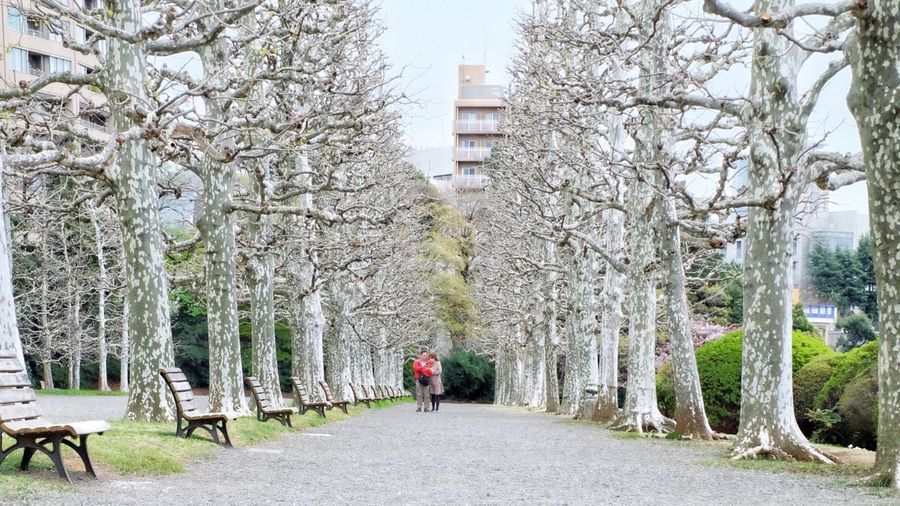 Rear view of woman walking in park during winter