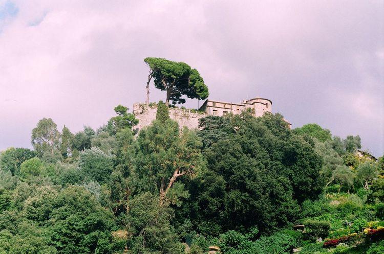 Portofino castle with big tree on the mountain. Film Italy Nature Outdoors Portofino Summer Travel Tree Trees Zenit