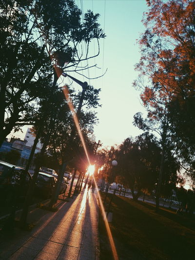Portal Cielo Parque  Park Tarde  Afternoon VSCO Trelew Chubut Argentina Argentina Photography EyeEmNewHere Tree Sky Sunbeam Sun Lens Flare Sunset Silhouette Optical Illusion Solar Flare Orange Color Evening Bright Shining