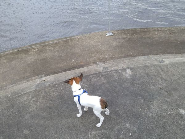 Pets Jack Russell at Riverfront Park Beautiful ♥ Day By The River Windy Day One PersonHigh Angle View Nature One Animal Dog Outdoors Real People Domestic Animals Mammal Men One Man Only People Jack Enjoying The Day 💛 Outdoor
