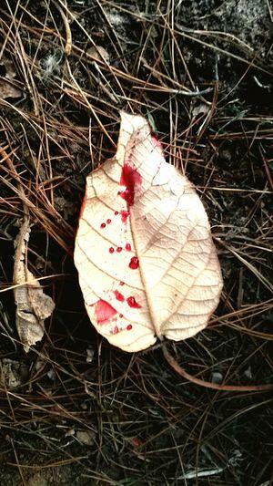 Leaf Drygrass Drops Of Wine