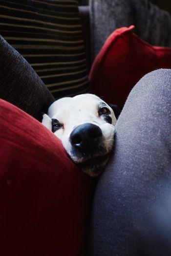 One Animal Domestic Pets Dog Mammal Canine Domestic Animals