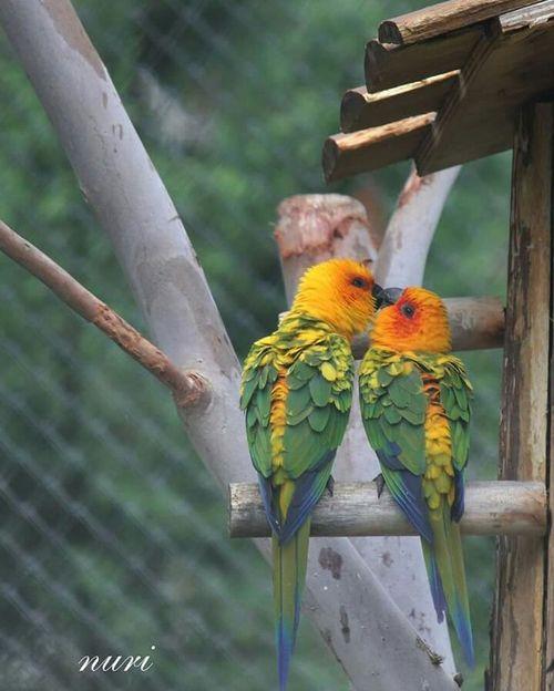 Birds Nature Natural Beauty