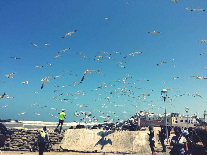 Morocco Blues Snapshots Of Life EyeEm Nature Lover Beachphotography