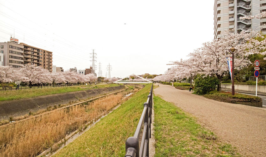 Architecture City Clear Sky Day No People Outdoors River Riverside Sakura Sky The Way Forward Tree
