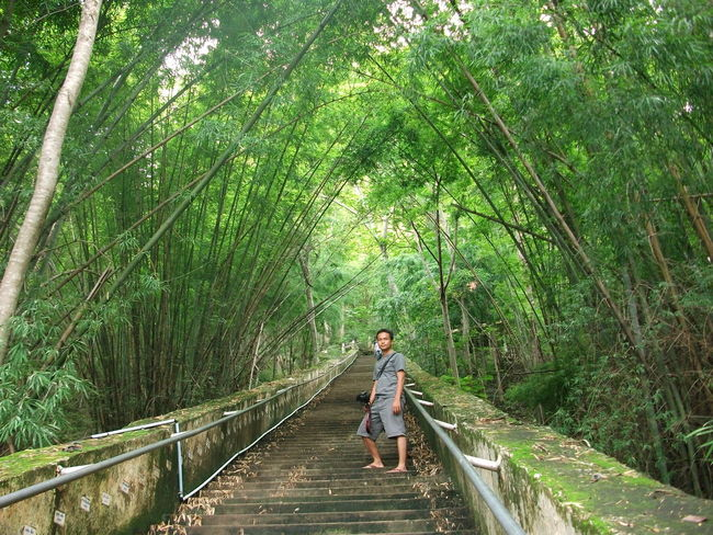Tree Real People Plant Forest One Person Growth Lifestyles Leisure Activity Green Color Walking Land Nature Day Beauty In Nature Bridge Connection Full Length Direction The Way Forward Footbridge Bridge - Man Made Structure Outdoors Bamboo - Plant WoodLand