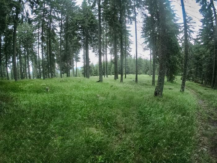 Gren grass in
