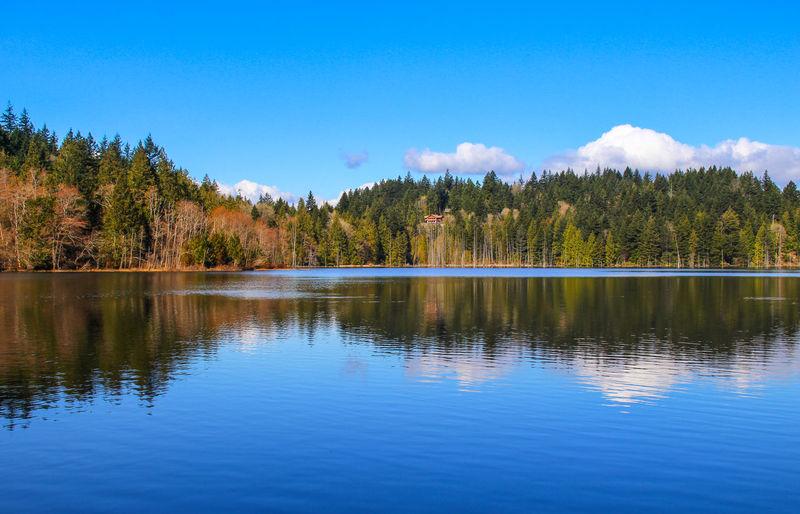 Reflection of trees in grafton lake