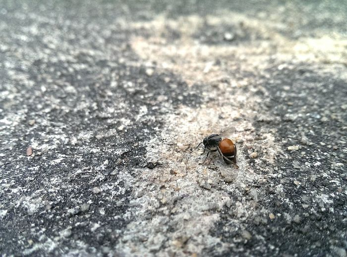 Bee Bug Bugs Nuture Onthestreet Streetphotography The Places I've Been Today