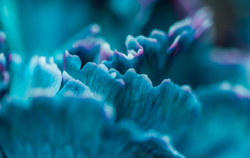 Close-up of coral growing underwater
