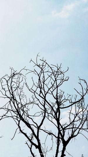 Tree Autumn Fall Dry No Leaves Plain Simple Minimalism Shadows & Lights Sunlight Afternoon Outdoors Cloudscape Sky Blue Cyan The Week on EyeEm EyeEm Best Shots EyeEmNewHere EyeEmBestPics EyeEm Best Shots - Nature Sky Cloud - Sky