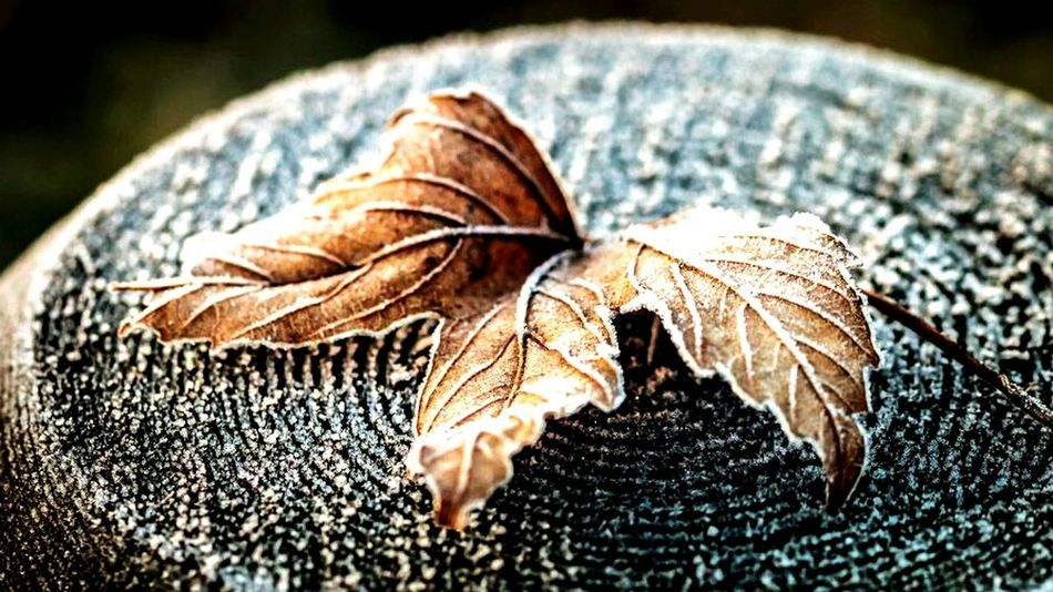 Fall Beauty Nature Nature Photography Macro Nature Macro Herbst Laub Frozen Autumn Colors The Great Outdoors - 2015 EyeEm Awards