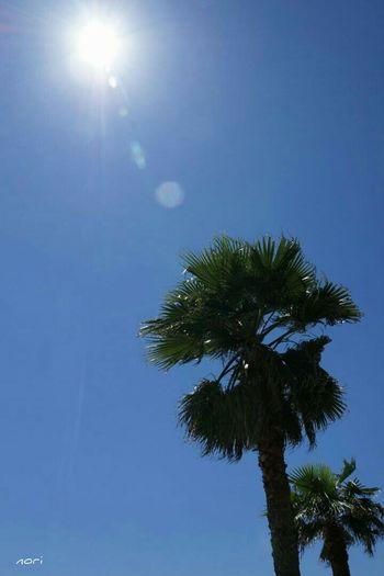 くどいようですが「☀梅雨明け宣言❗」Good night🌙 have a nice weekend 🙋 https://youtu.be/EVRLb0iN4Lw 同じ空の下 繋がる想い は Love_blue Sky_collection Blue Sky Hagging A Tree EyeEm Nature Lover Landscape キラキラな Kagoshima