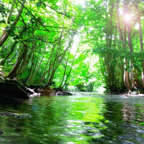 Nature_collection Sun Rays Camping Canal