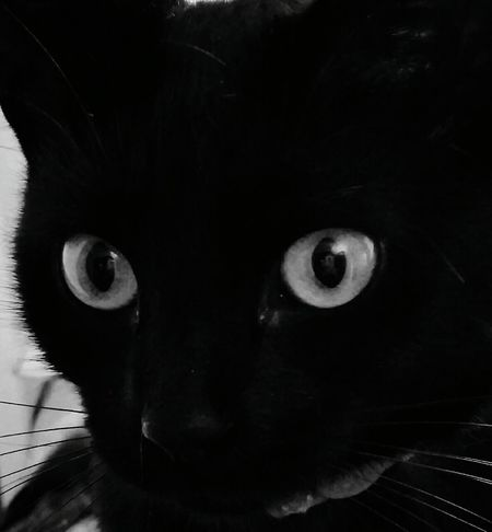 Penny Black Cat Adorable Cat  Pusspuss Catlovers