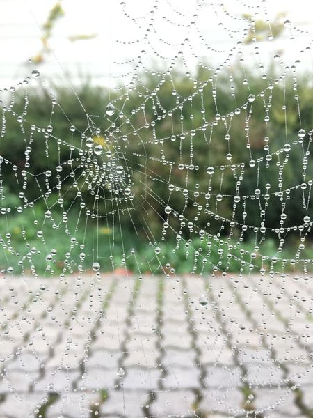 …quite fascinated by these spider webs! 1/4 — Captured them early yesterday morning near Dortelweil! Spider Web Spinnennetz