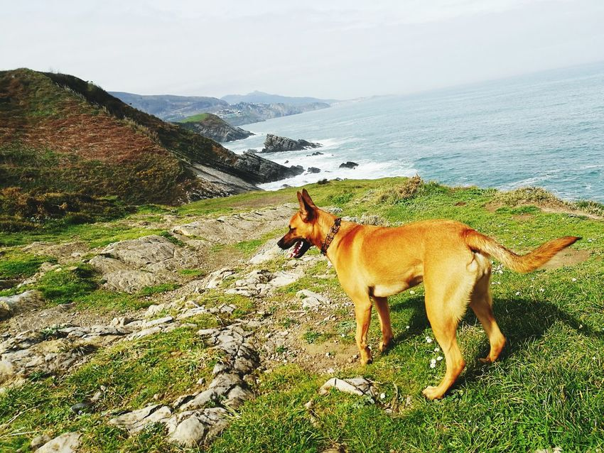 Dogslife Malinoislovers Green