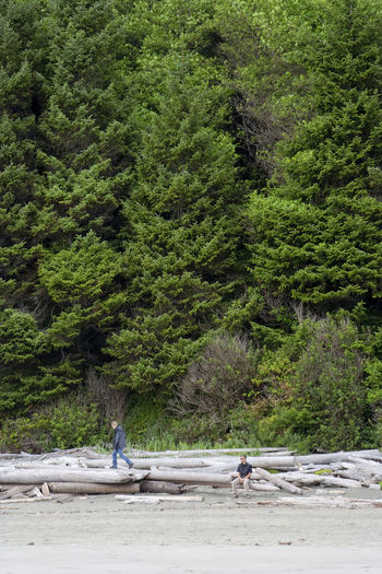 Men At Beach Against Trees In Pacific Rim National Park Reserve