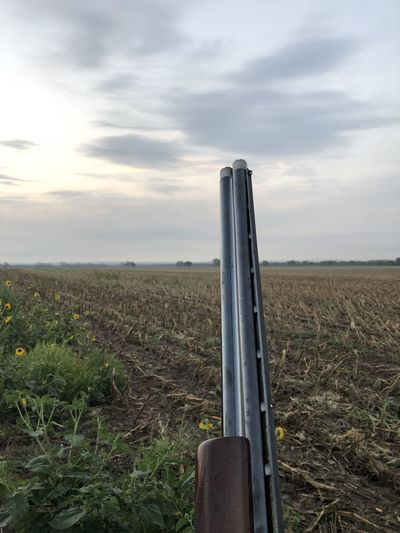 hunter in field holding his weapon Beauty In Nature Growth Waiting Outdoors Outdoor Pursuit Aiming Morning Light Weapon Rural Scene Recreational Pursuit Hunter Copy Space Open Space Personal Perspective No People Pursuit - Concept Rifle Holding Texas Field Farm Crops Hunting Agricultural Field Landscapes With WhiteWall