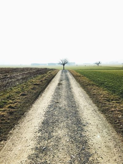 Road to tree