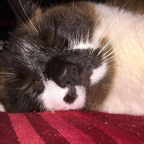 Cat Hello World Ooh Street Photography LA