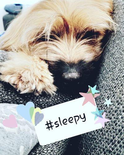 #sleep Pets