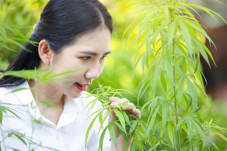 Portrait of doctor checking and analizing hemp plants, marijuana research, cbd oil, concept