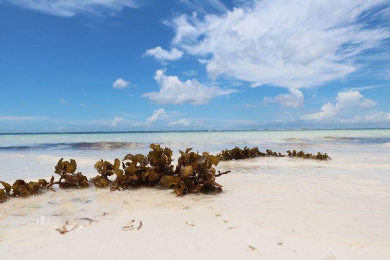 Zanzibar beach Water Sea Sky Beach Land Scenics - Nature Cloud - Sky Beauty In Nature Horizon Over Water Tranquility Horizon Tranquil Scene Sand Nature No People Idyllic EyeEmNewHere