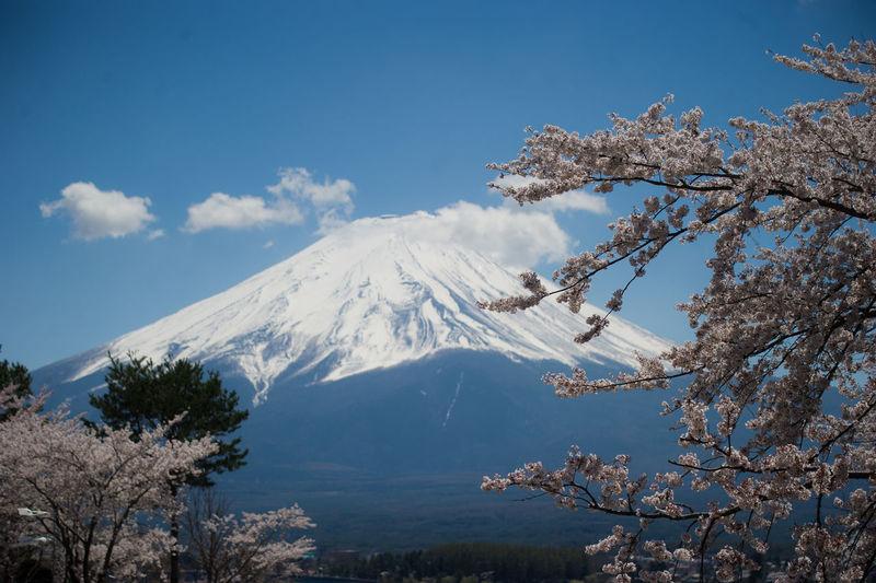 Fuji and Sakura Fuji Mountain Sakura Sakura Blossom Snow Beauty In Nature Mountain Cloud - Sky Power In Nature Selective Focus Outdoors Volcanic Landscape Tranquility Vacations Kawaguchiko Lake EyeEmNewHere