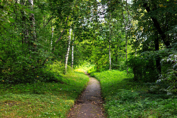 Footpath in Siberian Botanical Garden of Tomsk State University Beauty In Nature Day Direction Foliage Footpath Forest Green Color Growth Land Lush Foliage Nature No People Non-urban Scene Outdoors Plant Scenics - Nature Siberia Summer The Way Forward Trail Tranquil Scene Tranquility Tree WoodLand