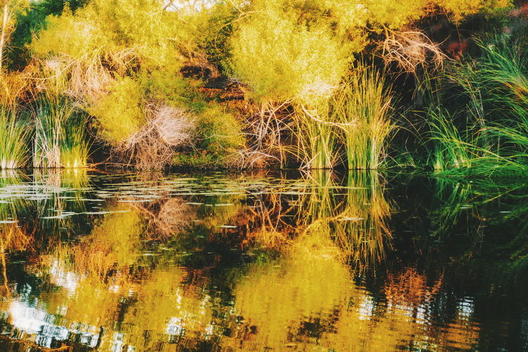 Backgrounds Reflection Abstract Water No People Outdoors Lake Tree Day Nature Close-up Sky Beauty In Nature Tree Branches Against The Sky Tree Scenics Tranquil Scene Autumn Tranquility