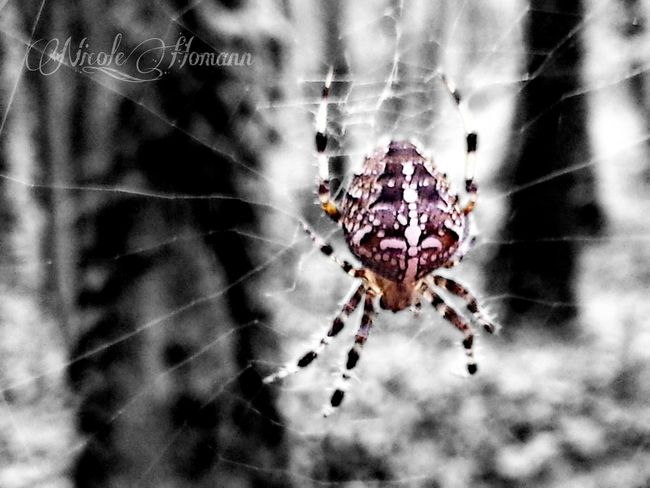 Nature_collection Spider Bw_collection Blackandwhite