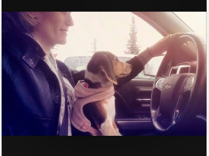 puppy drive Penelopemildred Drivingpup Togetherness Child Passenger Seat Car Interior Car Females Childhood Window Bonding Summer Road Tripping