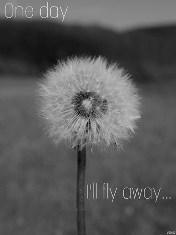 Good night...🌔 Quotesandsayings Quotes Quotes & Poems Dandelion Seed Focus On Foreground Fragility Nature Close-up Outdoors Beauty In Nature Blackandwhite Bnw Black & White Bnwphotography Bnw_shot Germany