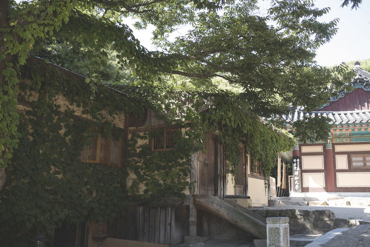 Architecture Buddhism Building Exterior Built Structure Day House Korea Nature No People Outdoors Sky Tree