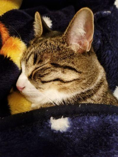 Pet Portraits Pets Sleeping Relaxation Domestic Animals Feline Vixie