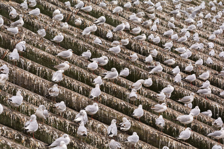 High angle view of birds on rooftop