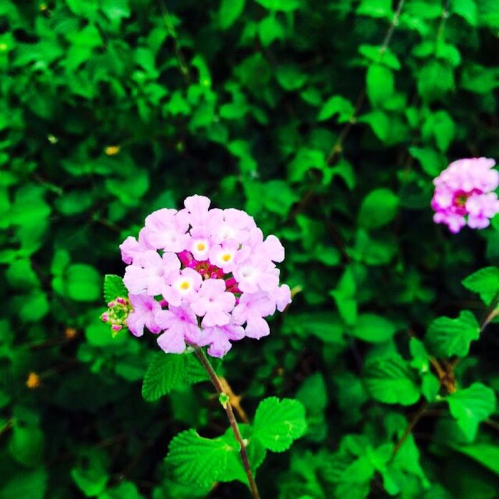 Flowers Saturday