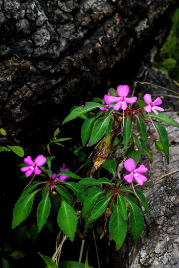 Wild flower18 Flower Growth Pink Color Fragility High Angle View No People Flower Head Green Color Petal Nature Freshness Beauty In Nature Plant Leaf Close-up Outdoors Night Forest Mountain EyeEmNewHere The Week On EyeEm Blooming Freshness Day Beauty In Nature