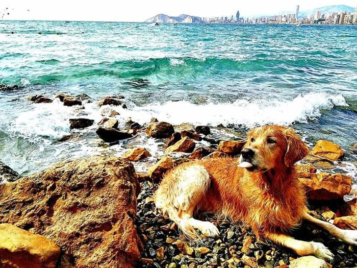Domestic Animals Sea Nature Pets Beach Day No People Outdoors Mammal Relaxation Animal Themes One Animal Dog Sand Water Sky Beauty In Nature Close-up Playing Dogfriend Dogslife Dog❤ Golden Golden Retriever Nature