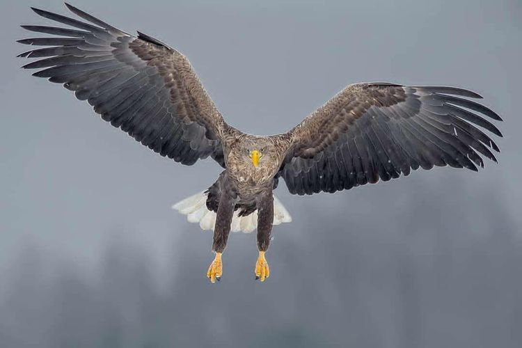 Low angle view of eagle flying in the sky