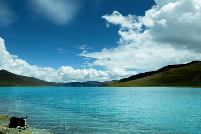 Beauty In Nature Blue Cattle China Photos Landscape Mountains And Sky Nature Outdoor Pursuit Outdoors Plateaudecalifornie Pure And Untouched (raw Image) Scenics Sea Sheep Lake Tibet Tibet Travel Tibetan Culture Travel Destinations Vacations Waterfall 湖 湖 Lake EyeEm本质上点¯x佳能 - 感受之旅
